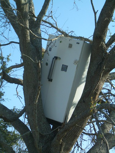 Fridge in tree, 15 feet above the ground. Incredibly, the magnets are still affixed | by Adam bd