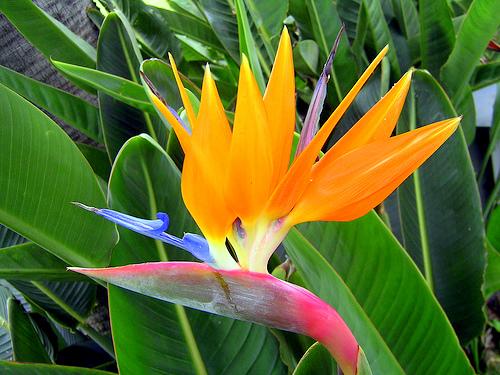 Fleur Exotique Pour Un Homme Erotique Marie Popine1 Flickr