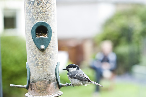 Coal Tit Feeder | by blackpuddinonnabike