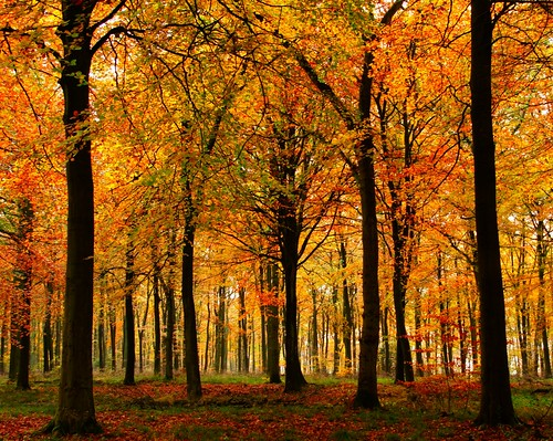 Forest Trees in Autumn | by algo
