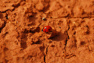 Lady Bug | by goingslowly