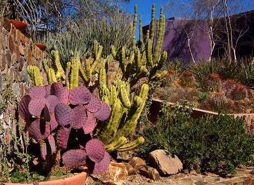 Colorful Cacti At The Arizona Sonora Desert Museum Tucson