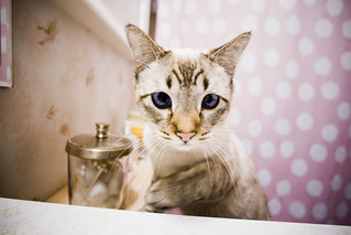 Rajah in the bathroom | by jamophotojameson