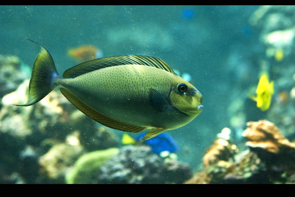 Name that fish lol i have nooo idea what kind of fish for What kind of fish do i have