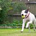 Ida playing fetch