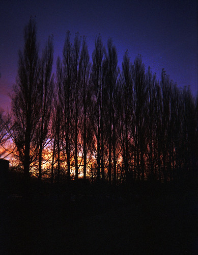 sunrise behind the Poplars | by Born in York