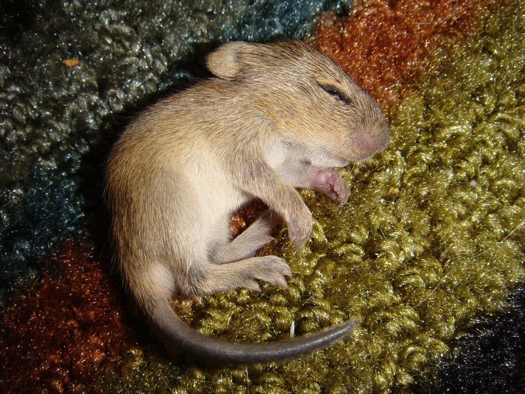 Image Result For Cute Baby Mouse