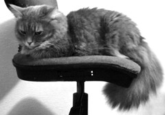 Cat on Chair | by azalea_wynters