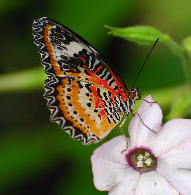 Z Gallerie Butterfly Butterfly Show 4   Fli...