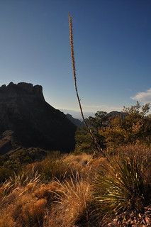 Yucca Stalk along the Trail | by Clinton Steeds