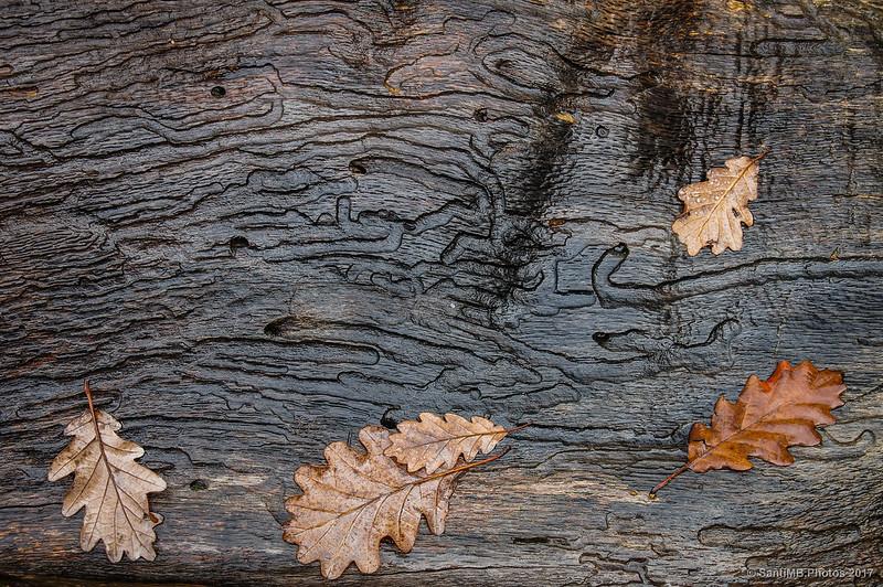 Detalle de un tronco de árbol muerto