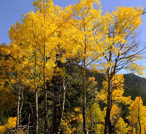 Fall 2008, Golden Gate State Park 28, Colorado | by sethgoldstein72