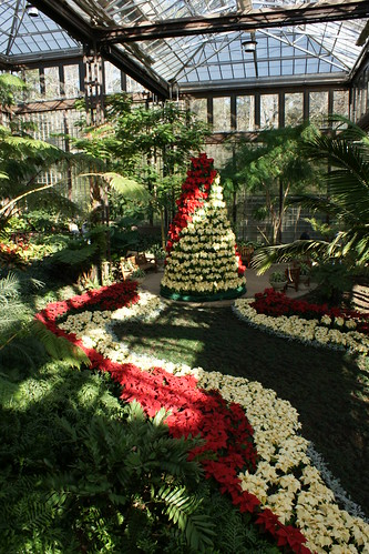 Poinsettia Display | by Wayfaring Wanderer