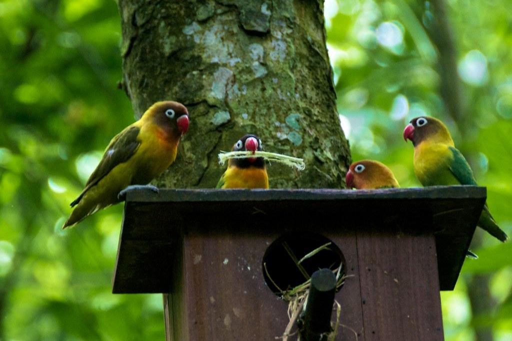 Image Result For Free Bird Nest