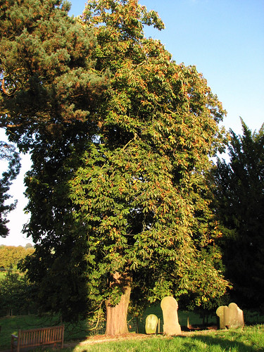 Horse Chestnut tree in Graveyard | by Ten Minutes From Home