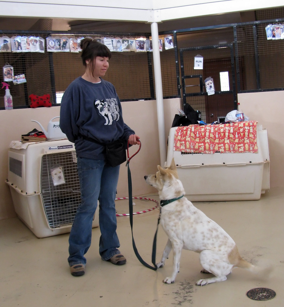 Best Dog Trainers In Gurgaon