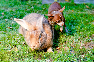 Small dog, big bunny | by estacey