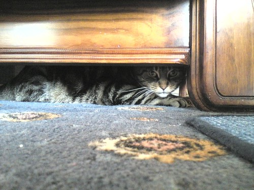 Mika hiding under the sofa | by Nikki-ann