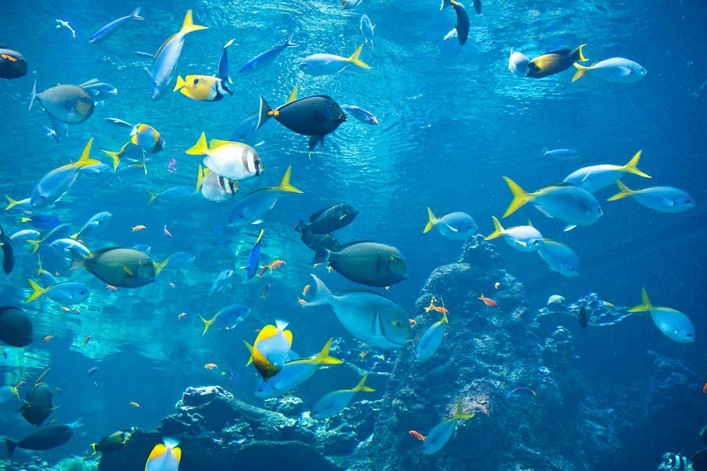 Philippine Coral Reef The Philippine Coral Reef Aquarium