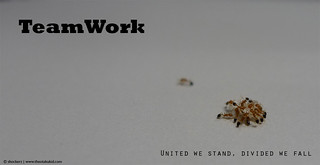 TeamWork - Even the ants do it! | by Tommy L.