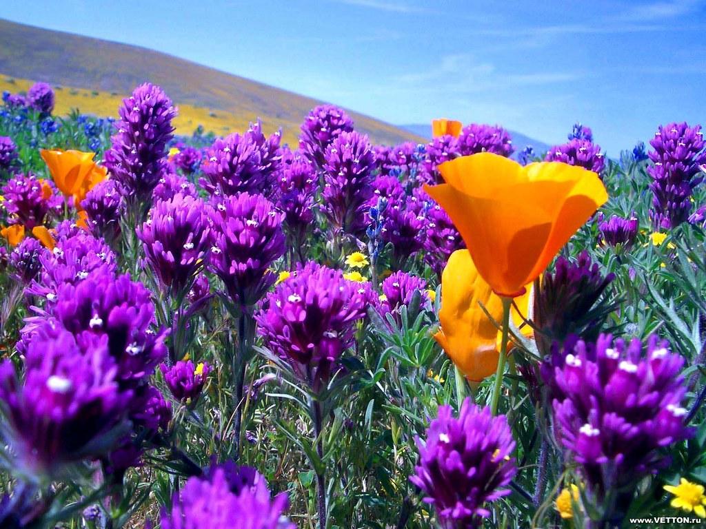 Beautiful Flowers Wallpaper Hd The Most Beautiful Flower Flickr