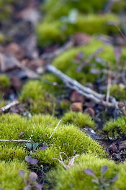 Moss Cushions