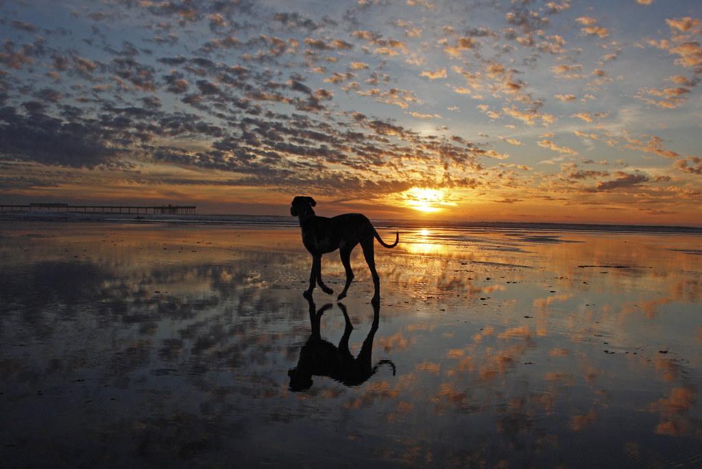 2 52 Sunset At Dog Beach In Ocean Beach Beautiful