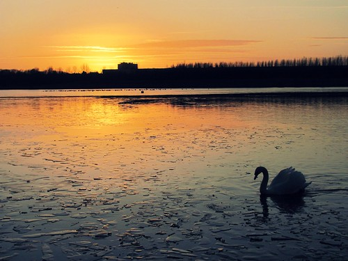 Sunset Swan | by lisaluvz