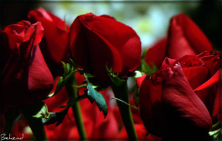 Happy Valentine Day | by Behzad No