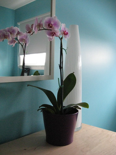My first Orchid - Feb 2010 | by Jessie {Creating Happy}