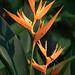 Flower I0001-00894.jpg