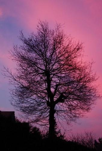 Arbre Sur Ciel Du Soir 10 Mars 2010 Jmsatto Flickr