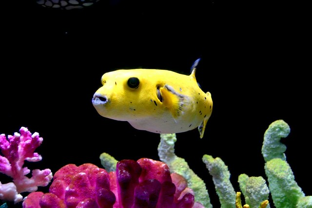 Tropical fish florida paolo porqueddu flickr for Whiting fish florida