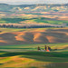 Palouse Pastel Rolling Hills and a Red Barn