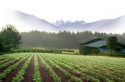 Cascadian Farm in the Morning | by Cascadian Farm