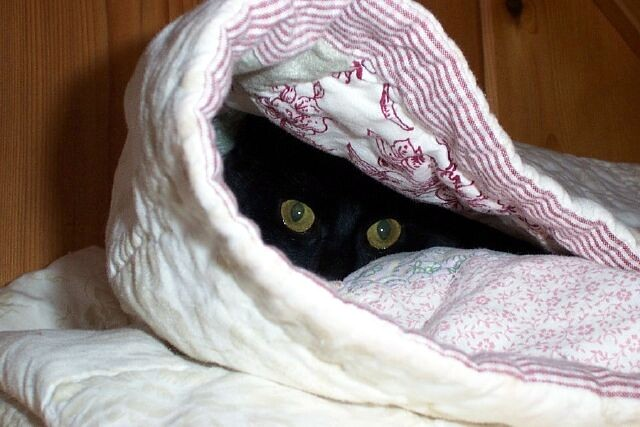 How To Get A Cat From Hiding