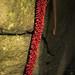 """Red Stick"" (Anthurium Bakeri)"