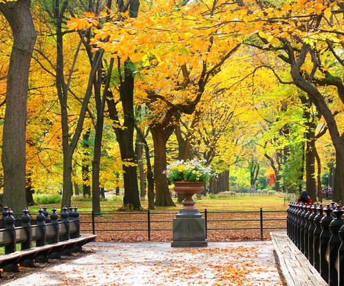 Central Park, New York City | by D' La Crux Photography