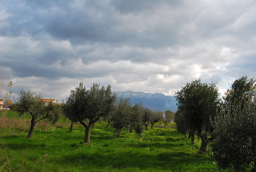 Olive Trees & Clouds | by goingslowly