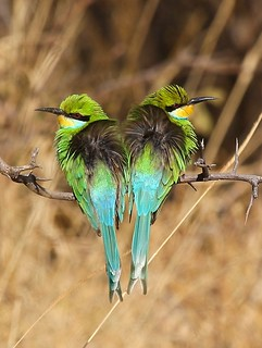 Not Talking | by NZ Nature by Glenda Rees