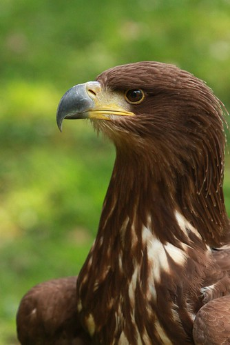 Eagle | by pg8094