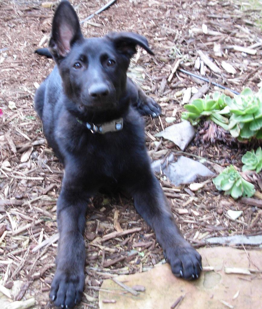 Playful Dog Adoption Papers
