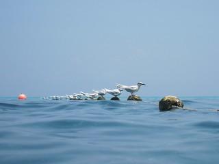 Seagull (Terns) desktop | by amateur_photo_bore