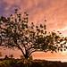 Coconut Island Sunrise