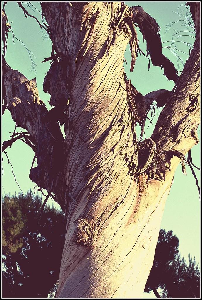 tree @ Lake o'neill camp pendleton   Joshua Ommen   Flickr