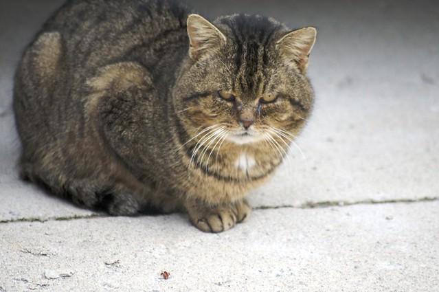 Barn Cat Food Video