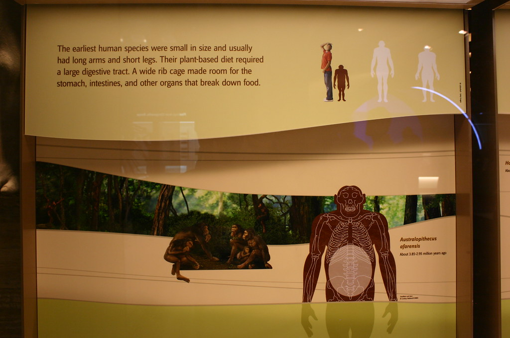 Hall Of Human Origins Smithsonian National Museum Of Natural History