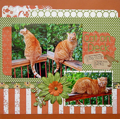 Cat On Deck Celeste B Flickr