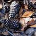 pine cones sweetgum balls leaves