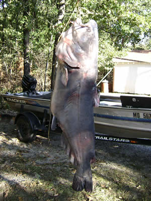 Fishing truman lake fishing truman lake 92 lb catfish for Truman lake fishing report
